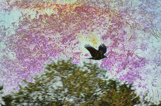 Raven Nightmare by shugli