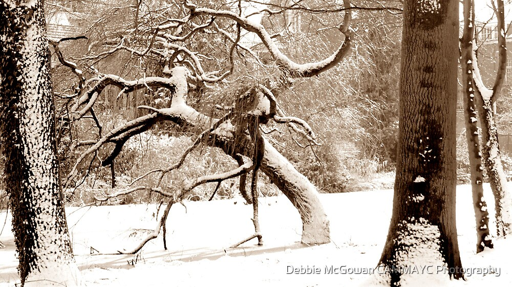 A Winter Scene by Debbie McGowan CAMMAYC Photography