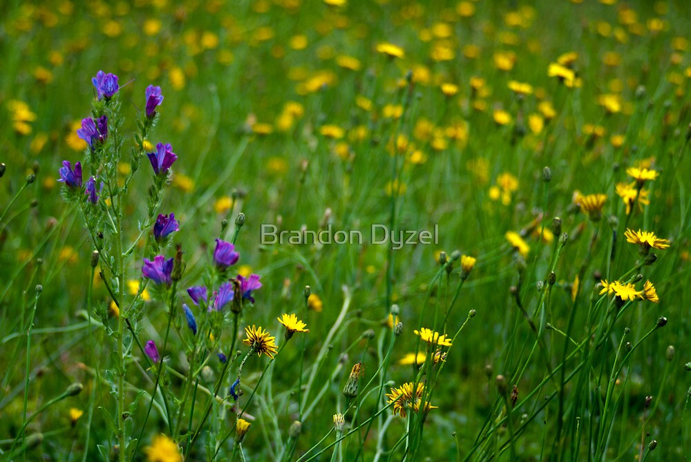 Weeded Lawn by Brandon Dyzel