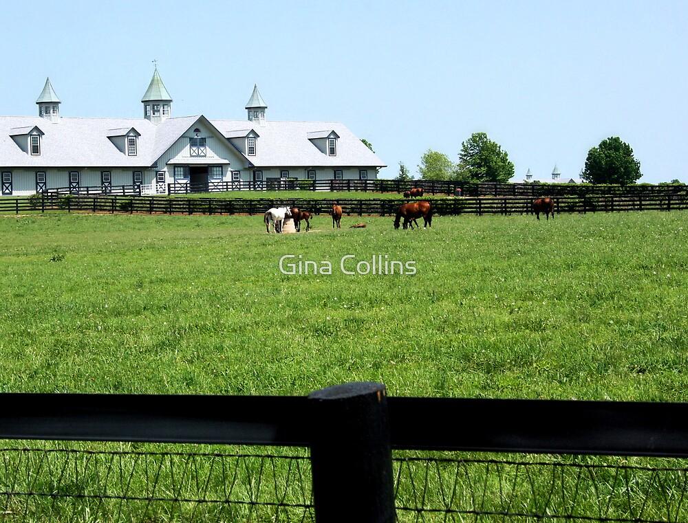 Kentucky Horse Farm by Gina Collins
