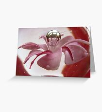 Paperweight Greeting Card