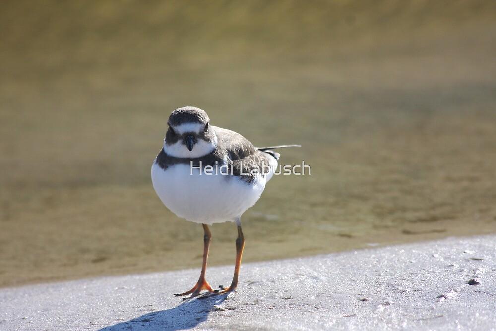 Sand Piper Bird by Heidi Labusch