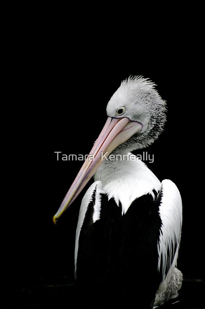 The Majestic Pelican XI by Tamara  Kenneally