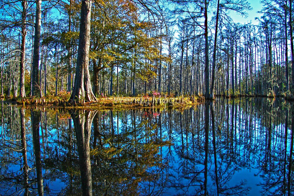 Cypress Gardens in the Fall by Wendy Mogul