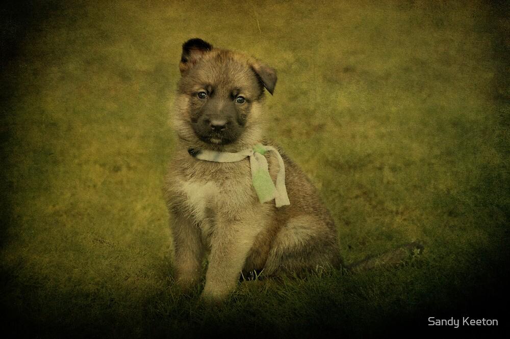 Puppy Sitting by Sandy Keeton
