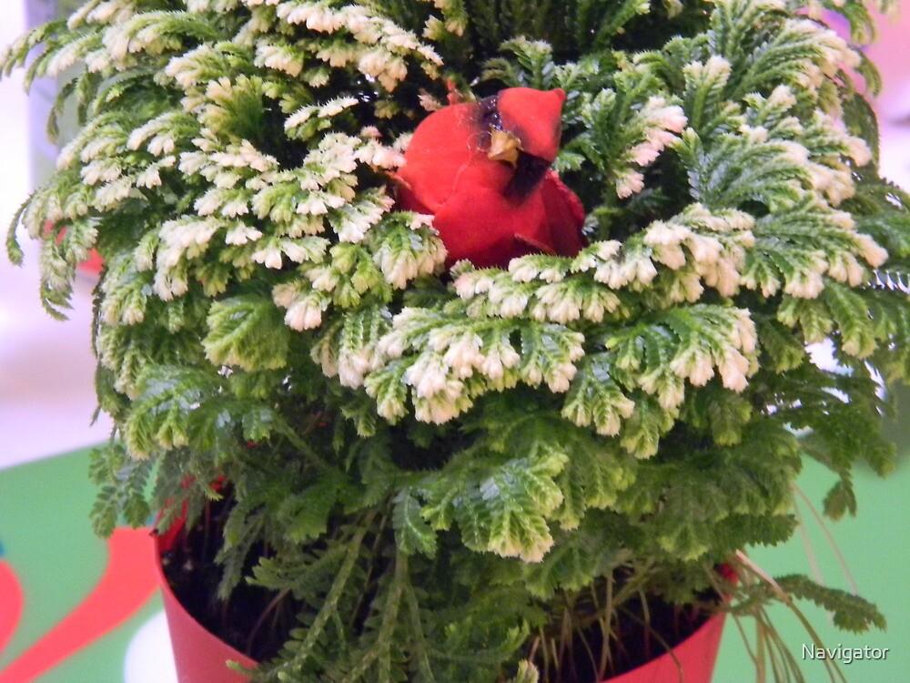Frosty Fern, Club Moss, Spikemoss by Navigator