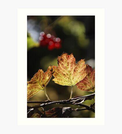 West Sweden Autumn colour Art Print