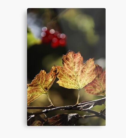 West Sweden Autumn colour Metal Print