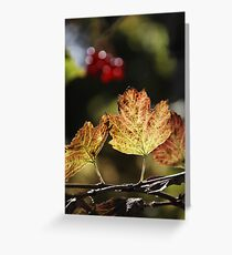 West Sweden Autumn colour Greeting Card