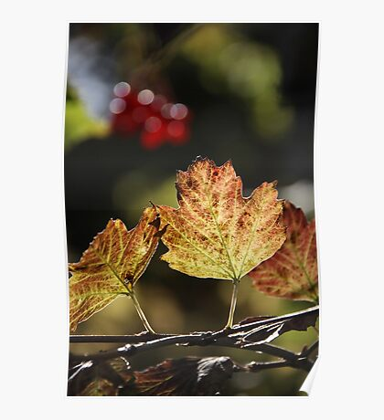 West Sweden Autumn colour Poster