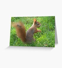 Nut-tastic! Greeting Card