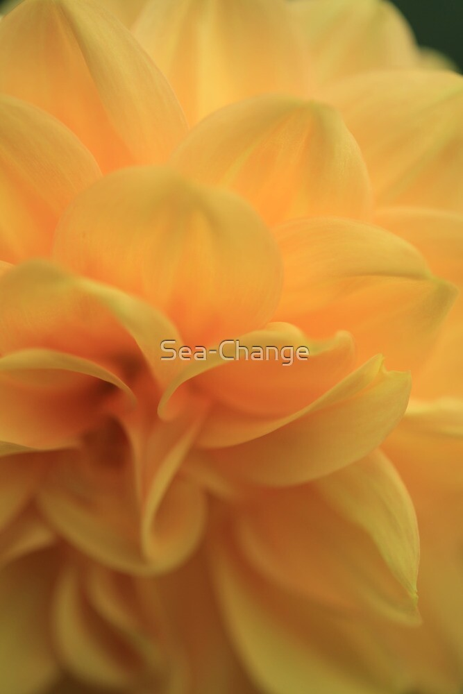Golden and Graceful by Sea-Change