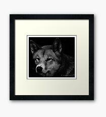Canine portrait in b/w Framed Print