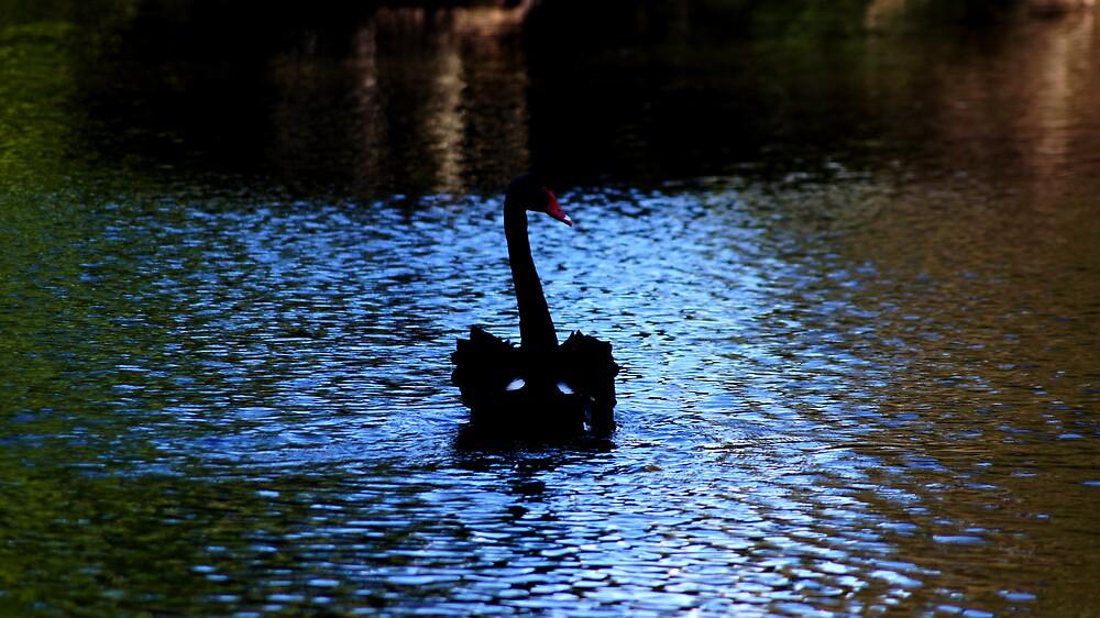 Black Swan  by 1991xky