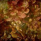 Hydrangea the KK Way by Debbie Robbins