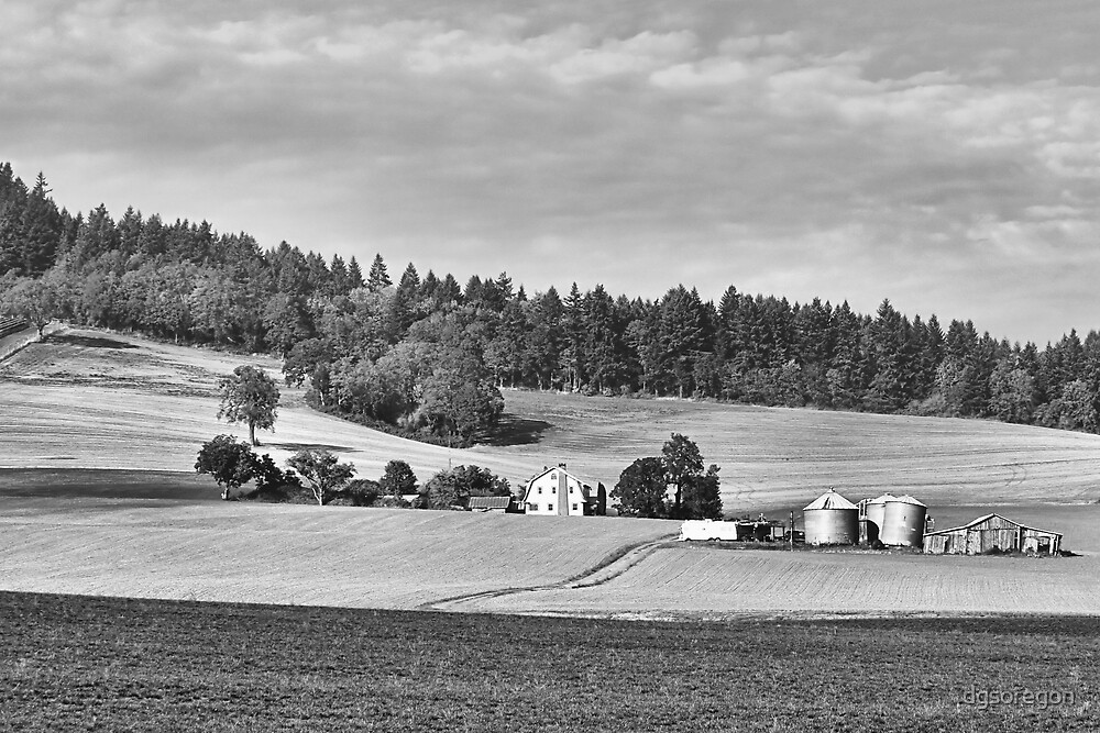 The Farm  by Donald Siebel