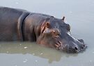 Hippopotamus by Will Hore-Lacy