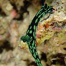 Nudibranch - Nembrotha kubaryana by Andrew Trevor-Jones