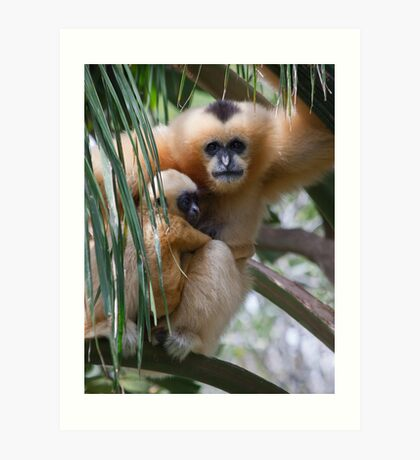 White Cheeked Gibbon and Infant Art Print