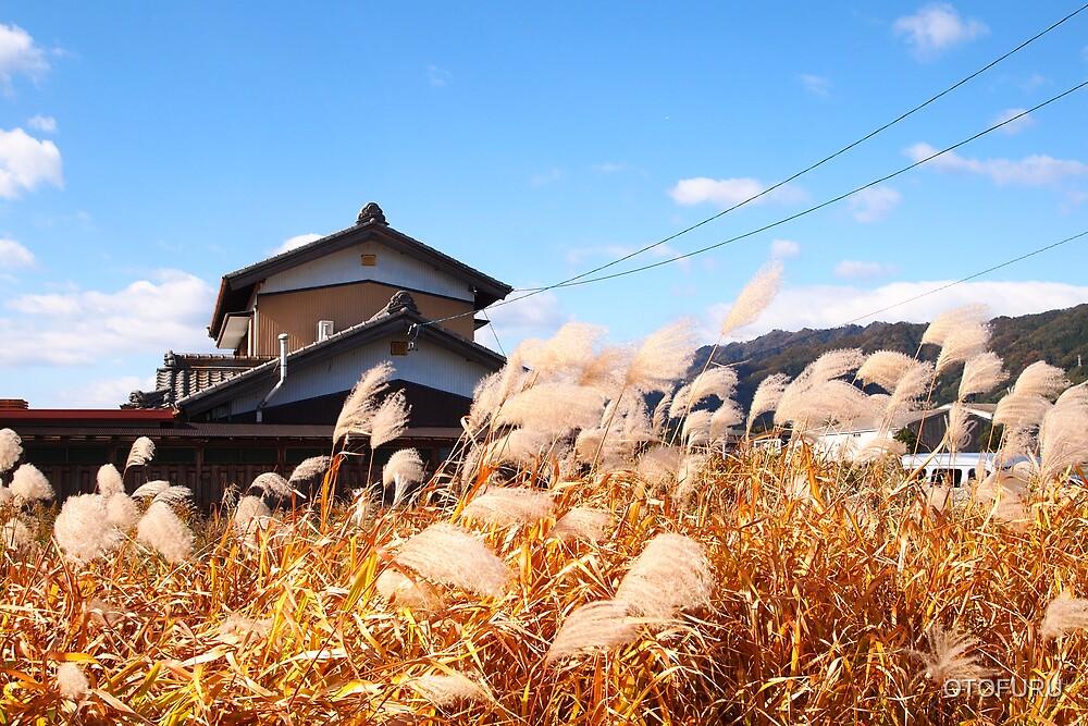 house amidst the rushes by OTOFURU