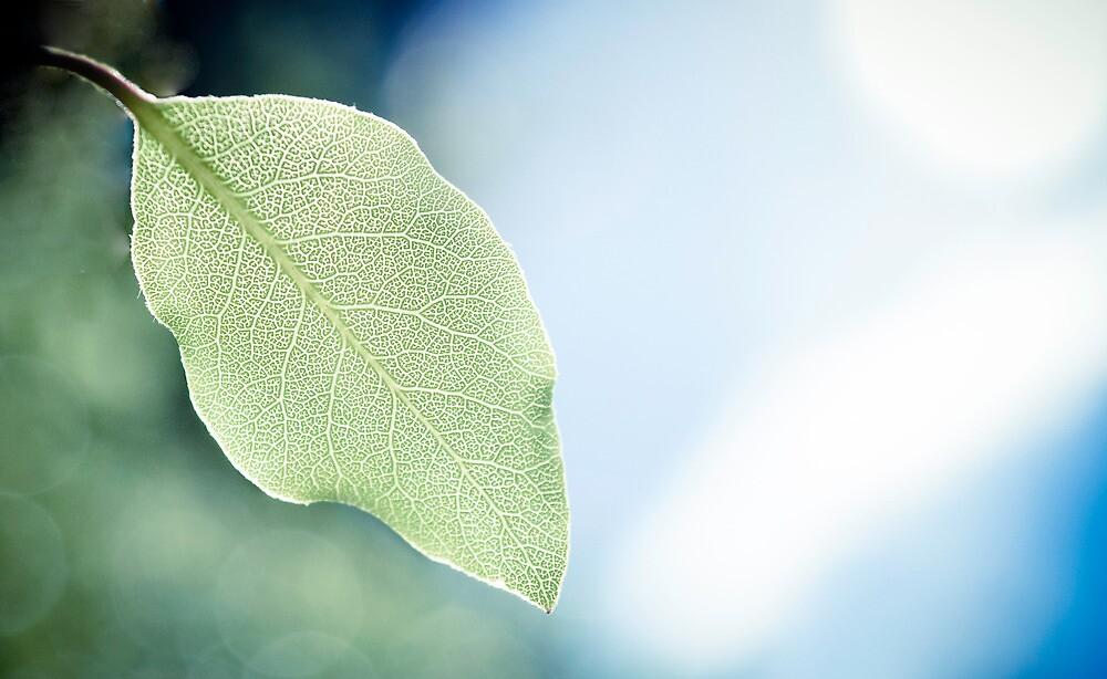 leaf veins by ak-photography