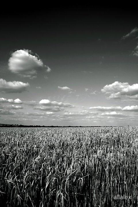northampton. by allalex