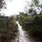 Sandy Path by Shemah Appleton