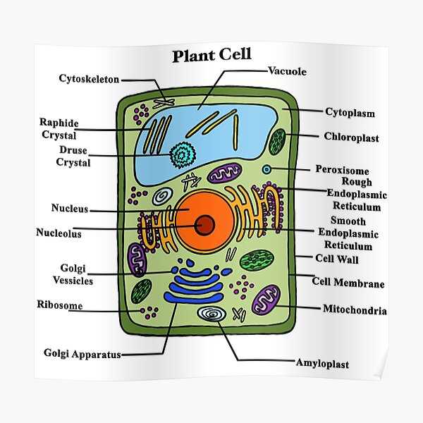 """""""Labeled Plant Cell Diagram"""" Poster by BundaBear 