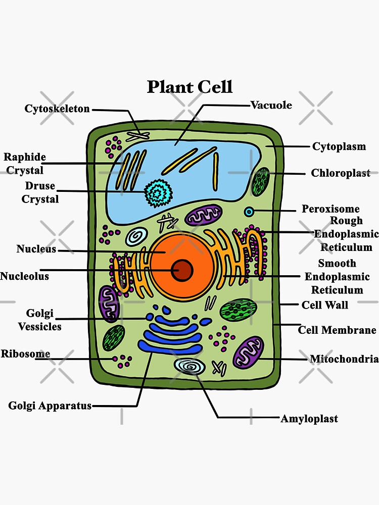 """""""Labeled Plant Cell Diagram"""" Sticker by BundaBear 