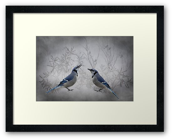 Two Jays by swaby