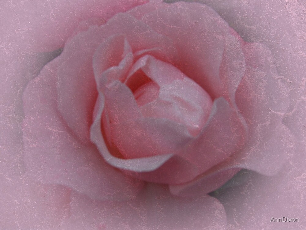 Pink Rose by AnnDixon