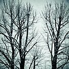 Winter trees II by Silvia Ganora