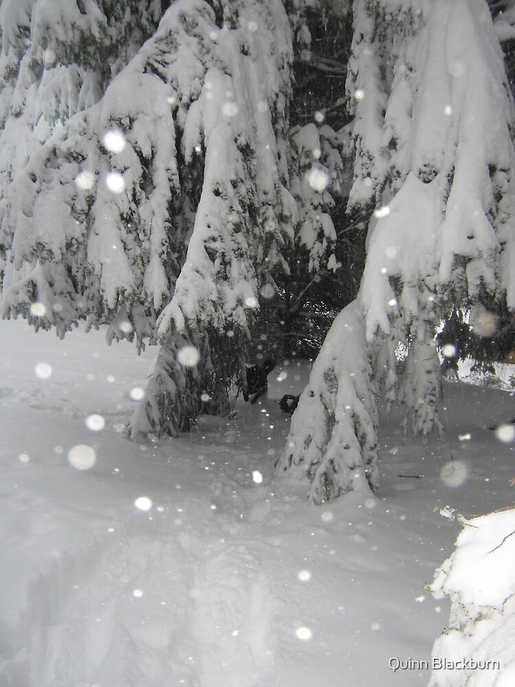 Winter Wonderland by Quinn Blackburn