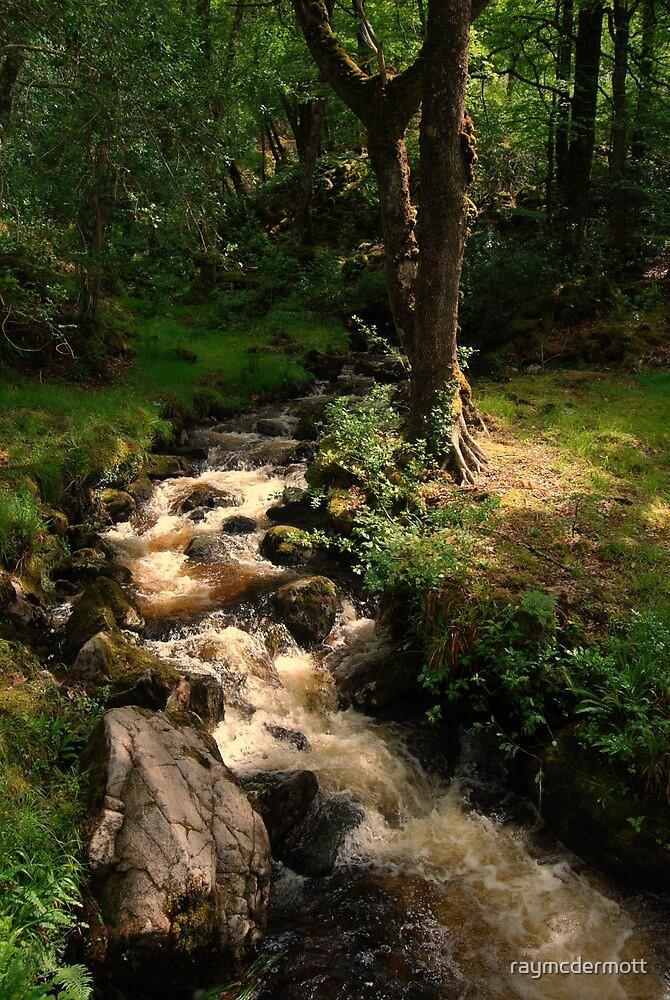 The Bridle Path by raymcdermott