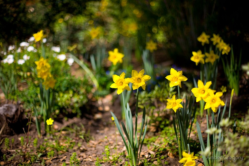 O fateful flower beside the rill-- The Daffodil, the daffodil!  —Jean Ingelow by Amber Gregory
