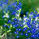 O, forget me NOT!  by Amber Gregory