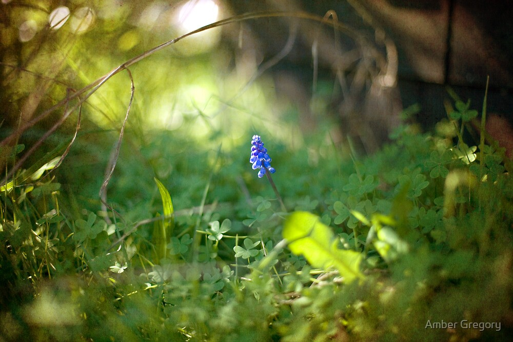 I am pleased that you have learned to love a hyacinth —Jane Austen by Amber Gregory