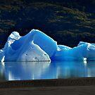 Iceberg by Peter Hammer