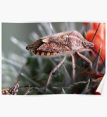 Sunflower Seed Bug - Agonoscelis versicoloratus - Stinkbesie Poster