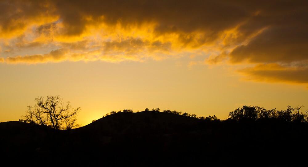 Golden Silhouette by Jennifer Tucker