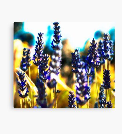 lavender gold Canvas Print
