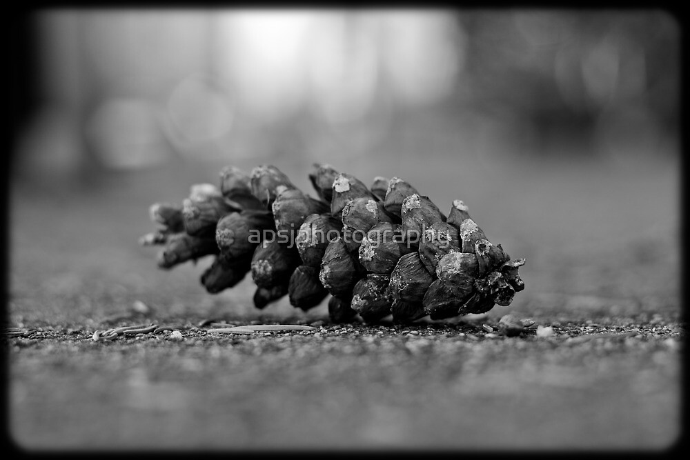 pine cone by apsjphotography