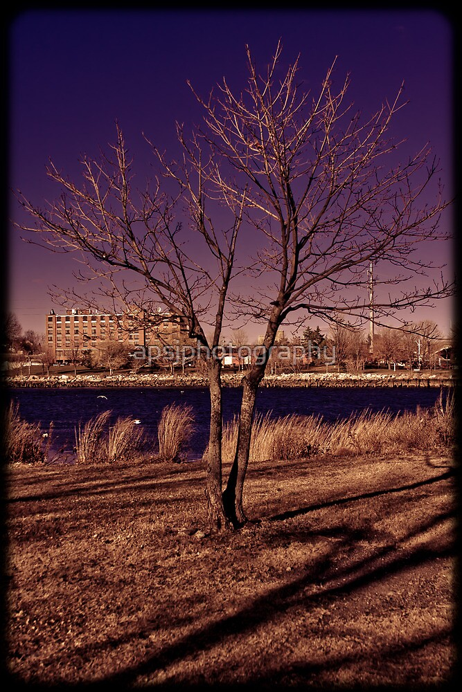 purple tree by apsjphotography
