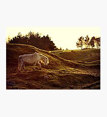 Welsh Mountain Pony  Photographic Print