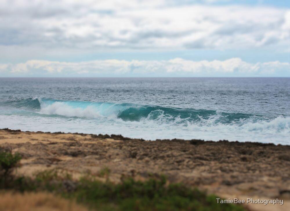 Waianae's Kaena Point by TamieBee Photography