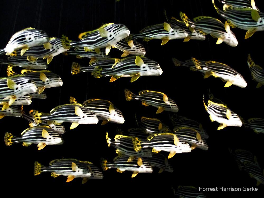 Fish Flying Overhead by Forrest Harrison Gerke