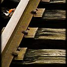 Tracks by apsjphotography