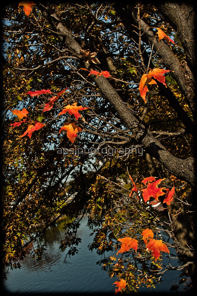Autumn Leaves by apsjphotography