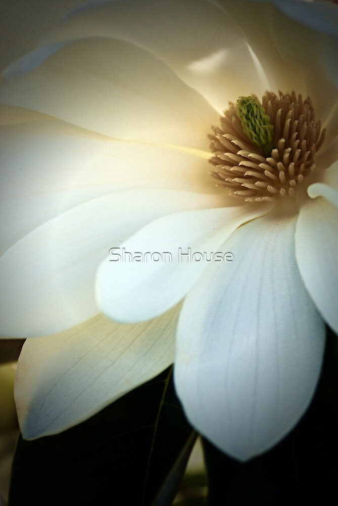 With Great Love.... by Sharon House