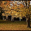 fall color  by apsjphotography